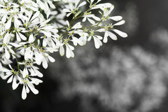 Abstract text box Pascuita flowers Stock Photography