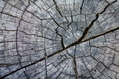 Abstract texture of a cracked tree  ,texture heartwood backgroun Stock Photography