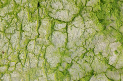 Abstract texture with cracks and green mold. Royalty Free Stock Photos