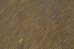 Abstract texture -  dry brown grass Royalty Free Stock Photo