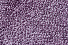 Abstract texture of genuine leather close-up, purple color, for background , backdrop, substrate, composition use, place. Texture of background for a designer Stock Photo