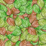 Abstract texture leaves background Stock Photography