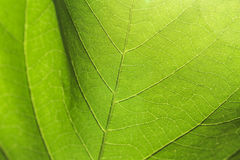 Abstract texture of the leaves. Royalty Free Stock Photo
