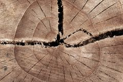 Free Abstract Texture Of Tree Stump, Crack Wood Ancient Royalty Free Stock Image - 143622466