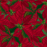 Abstract texture with poinsettia. Seamless pattern with Christmas flower bouquet ornament Stock Photography