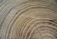 Abstract texture- Rings on the wood surface. Royalty Free Stock Image