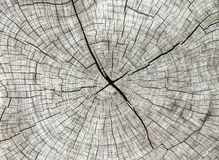 Abstract texture of tree stump, crack wood Royalty Free Stock Photos