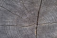 Abstract texture of wooden stump gray color Stock Photo