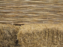 Abstract texture of yellow bamboo and hay background Royalty Free Stock Image