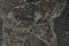 Abstract textured concrete background. Grey texture close up blank for design. Copy space. Royalty Free Stock Photography