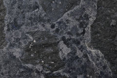 Abstract textured concrete background. Grey texture close up blank for design. Copy space. Stock Photos
