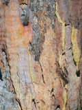 Abstract Textured Multi Coloured Bark Pattern. Multi coloured finely textured bark flaking off an Australian eucalyptus tree. An abstract bark pattern stock photos