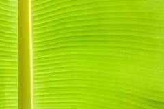 Abstract Textuur Achtergrond Vers Banaanblad Royalty-vrije Stock Foto