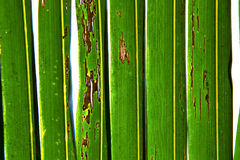 Abstract  thailand in the light  leaf   of a  green  white Royalty Free Stock Photo
