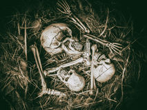 Abstract three skull face in abandoned bird nest. Abstract three skull face with bone body leg and arm in abandoned bird nest royalty free stock photos
