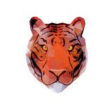 Abstract Tiger Head Stock Image