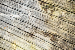Abstract timber log background Royalty Free Stock Images