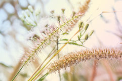 Abstract Tiny flower grass Royalty Free Stock Images