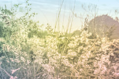 Abstract Tiny flower grass Stock Photo