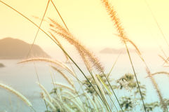 Abstract Tiny flower grass Royalty Free Stock Image