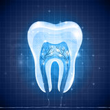 Abstract tooth cross section Stock Images
