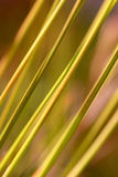 Abstract Tor Grass. Diagonal abstract composition of tor grass Stock Photo