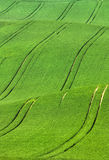 Abstract track trails in field Stock Photography