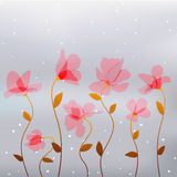 Abstract transparency pink flowers Royalty Free Stock Images
