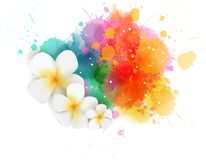 Abstract background with flowers. Abstract travel background with frangipani tropical flowers on colorful watercolor splash royalty free illustration