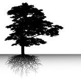 Abstract tree Stock Photos