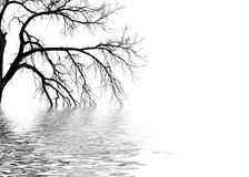 Abstract Tree. An abstract background of a silhouetted tree over water on a white background Royalty Free Stock Photos