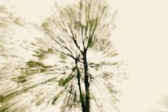 Abstract tree. Abstract in-camera zoom motion blur of a tree, a bit toned Stock Images