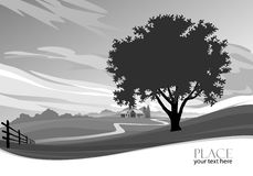 Abstract Tree B/W  Background - Stylized Stock Images
