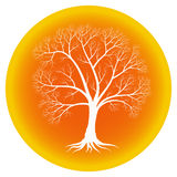 Abstract tree with bare branches on an orange background. Abstract tree with bare branches on an orange round background Royalty Free Stock Photos