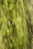 Abstract tree bark. Close-up of a tree trunk with green moss on it. The picture was taken with a camera movement to give it an abstract look Stock Photo