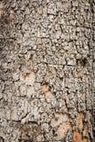 Abstract tree bark Royalty Free Stock Photos