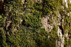Abstract tree bark with moss Royalty Free Stock Photos