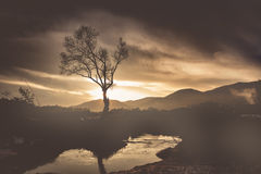 Abstract tree and beautiful background. Abstract tree in fog and beautiful background Stock Photo