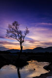 Abstract tree and beautiful background. Abstract tree at twilight time and beautiful background stock images
