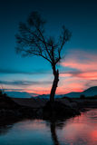 Abstract tree and beautiful background. At twilight time Stock Images