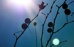 Tree branch in strong direct sunlight. Abstract of tree branch in the fall in blue background in strong direct light royalty free stock photo