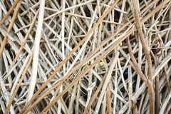 Abstract of tree branch. Pattern for background Royalty Free Stock Photography