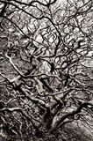 Abstract tree branches Royalty Free Stock Photography