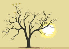 Abstract Tree and Burning Sun Background Royalty Free Stock Photos