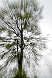 Abstract tree. Abstract in-camera zoom motion blur of a tree Royalty Free Stock Photo