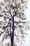 Abstract tree. Abstract in-camera zoom motion blur of a tree, a bit toned Royalty Free Stock Photography