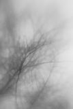 Abstract tree with focus on a blooming brance. This is a abstract version of a treebranche that just started to bloom, shot with a creative Lensbaby Stock Photo