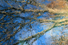 Abstract Tree Reflection Royalty Free Stock Photography