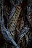 Abstract tree roots Stock Photography