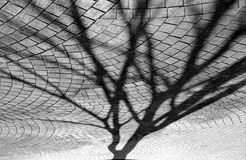 Abstract tree shadow. Image scanned from b&w film, abstract tree shadow on the paved stones floor background Stock Image